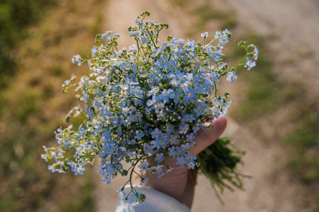 photo of forget me nots