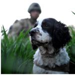 Photo of dog handler on patrol in afghanistan
